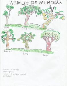 "Dessin des Contes ""Les arbres de mon village"""